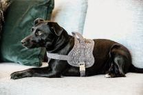Kentucky Dog Harness Body Safe Wool
