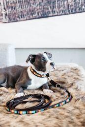 Kentucky Dog Lead Handmade Pearls