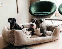 Kentucky Dog Bed Velvet