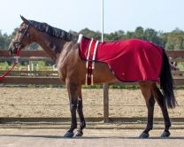 QHP lunging rug Florence