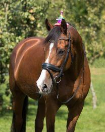 QHP Birthday hat horse