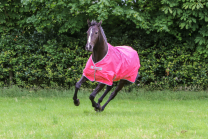 Bucas Freedom Turnout Pony Paradise Pink