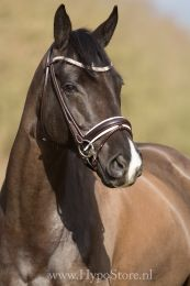 Premiera ''Imperia'' brown rolled bridle with white padding and crystal browband, gold buckles