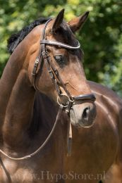 "Premiera ""Savona"" brown bridle with padded drop patent leather noseband and anatomically shaped headpiece, gold buckles"
