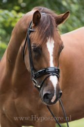 Premiera ''Monaco'' Black padded bridle with patent leather noseband, gold buckles
