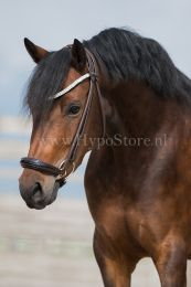 "Premiera ""Novara"" Brown rolled bridle with drop patent leather noseband, gold buckles"