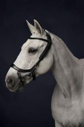 PresTeq Bridle FaySport