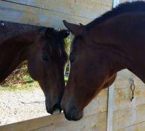 Unbreakable mirror for horses