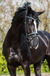 "Premiera ""Verona"" black anatomical bridle with white padded noseband"