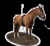 Equine legcooler complete