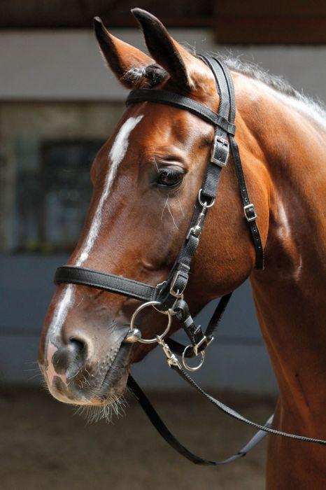 Harrys Horse Beugelriemen