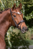 """Premiera """"Latina"""" brown anatomic bridle with patent leather details"""