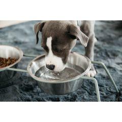 Kentucky Dog Bowl comfort feeder Medium