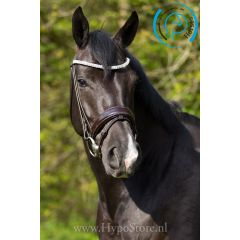 """Premiera """"Athena"""" brown bridle with patent leather noseband, gold buckles"""