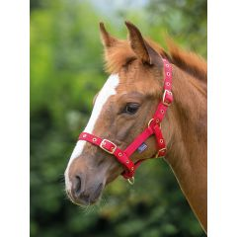 Shires nylon foal halter